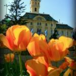 Vroshza_tulipnnal