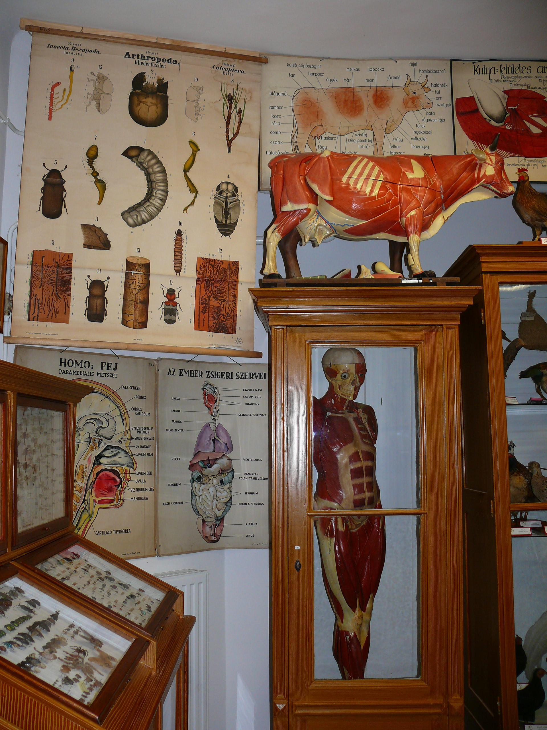 anatomia – Szeged Tourinform